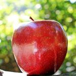 りんご 幹細胞