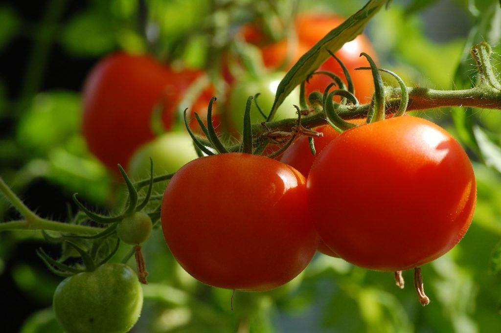 トマト 栄養価 食べ方